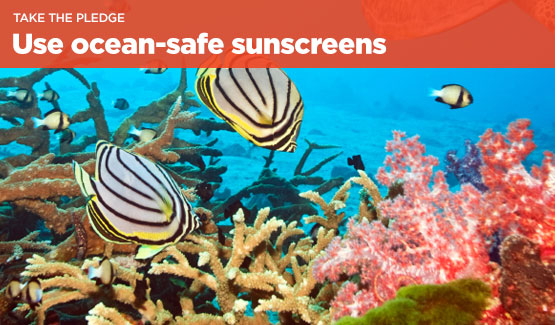 This summer, learn more and take the pledge to protect the reefs and your skin by using mineral-free sunscreen.