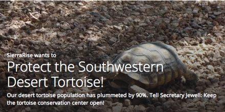 Protect the Southwestern Desert Tortoise!