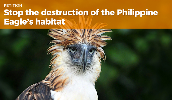 Sign the petition demanding that the Philippine government put a stop to destructive activities on Mt. Hilong-Hilong.