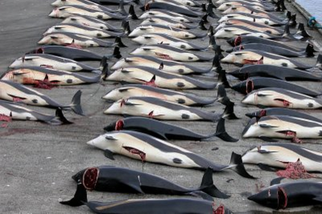 Stop the Japanese Whale Hunt-- for Good! WE NEED WHALES!