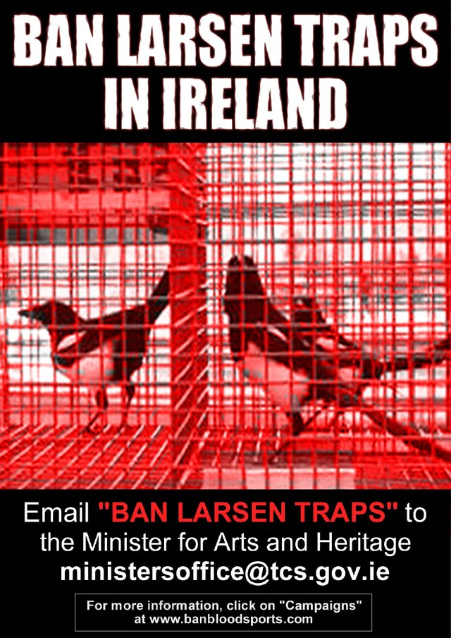 Ban Larsen Traps In Ireland by end of 2013