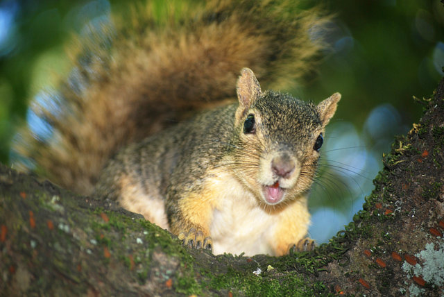 Stop the Decimation of the Squirrel Population!
