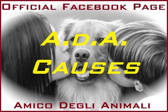 Amico Degli Animali Official Causes, Sostienici, Conosciamoci: CHI SIAMO E COSA FACCIAMO