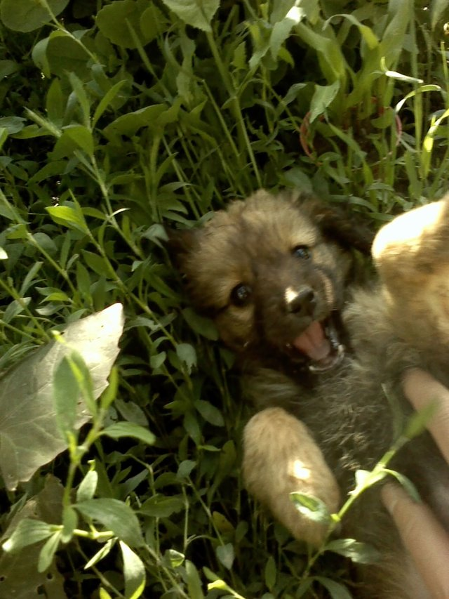 help two abandoned puppies in Tecuci