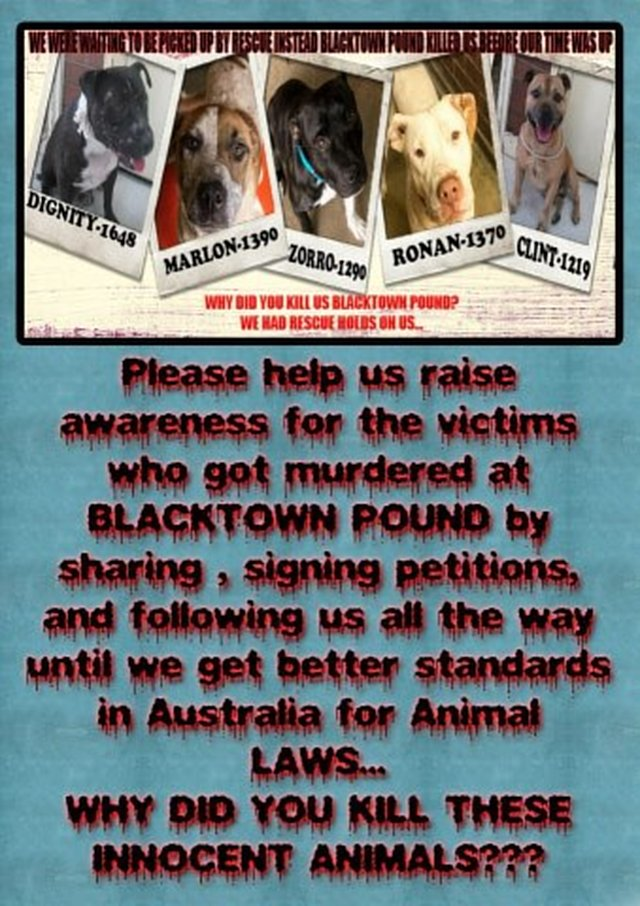 Blacktown City Council PLEASE rethink your Temperament testing policy at Blacktown Pound!