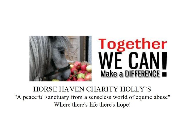 "Holly's Horse Haven Charity ""Voice For the Mountain Ponies Campaign"" Ireland"