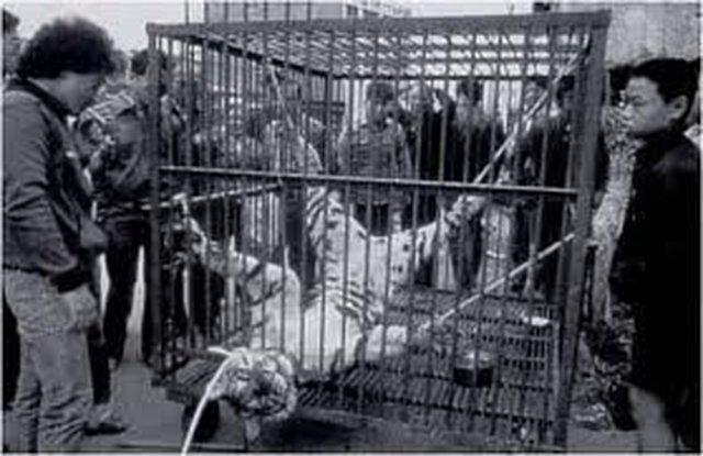 STOP ANIMAL VIOLENCE IN NEPAL