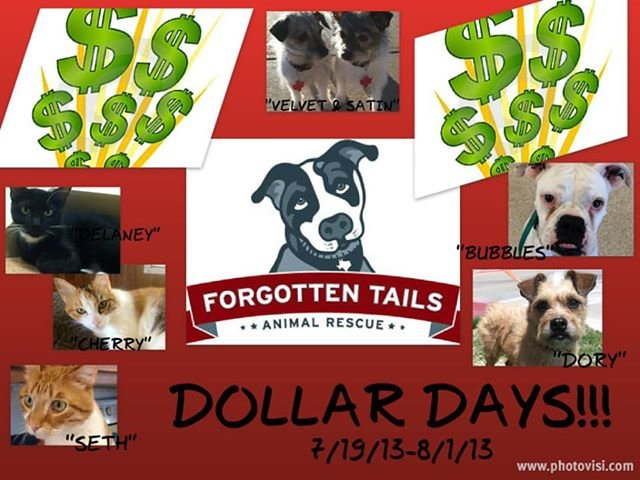 Forgotten Tails Animal Rescue in DFW