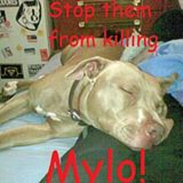 Save Kerser, Rocket & Mylo from being euthanized!