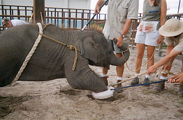 END ANIMAL CRUELTY IN CIRCUSES