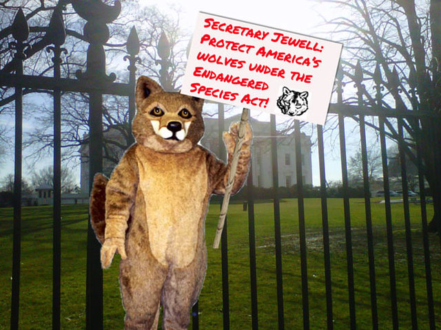 Help take the pro-wolf fight to the White House doorstep!