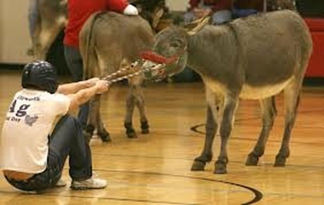 End the Abuse of Donkeys in the USA