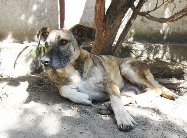 HELP INVALID DOG ZORA TO FIND HER FOREVER HOME  ♥