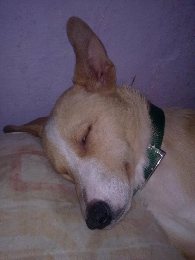 URGENT HELP FOR KEANU, THE DISABLED DOG