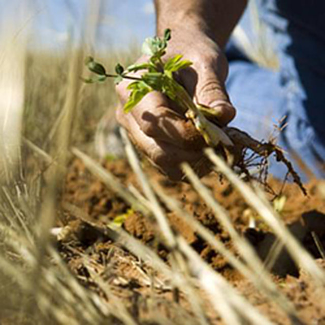 Pass a Farm Bill for Healthy Food and Sustainable Farming