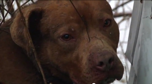 We demand that Detroit's stray dog issue is humanely addressed.