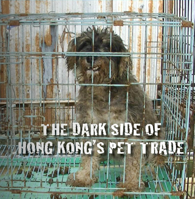 Stop the exploitation of animals for profit. Regulate the breeding industry with 1 license