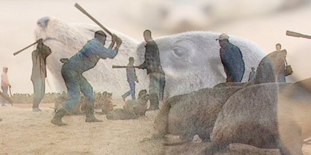 end the Namibian Seal Slaughter