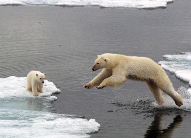 Polar Bears · Causes