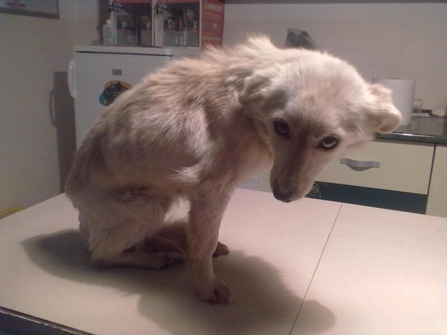 help Elly found in Tecuci