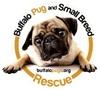 Buffalo Pug & Small Breed Rescue, Inc.