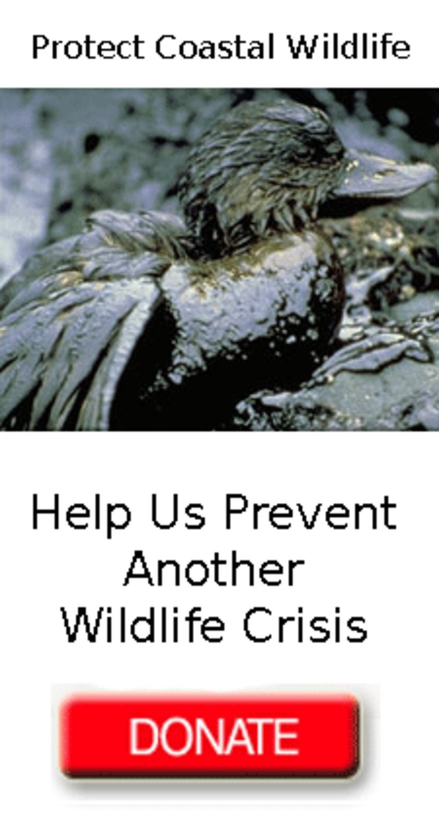 Protect Wildlife from Oil Spills