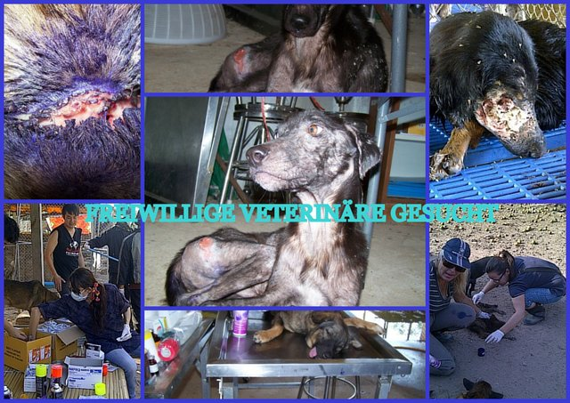 stop dog meat mafia