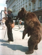 stop bears abuse