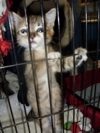 Support Stray and Feral Cat Rescue Efforts