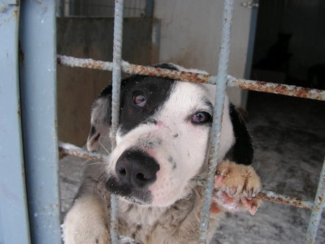 support Romanian animals!