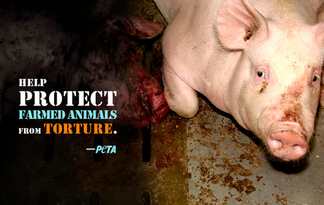 MAXIMUM PENALTY FOR ANY ANIMAL MUTILATED,BEATEN,TORTURED OR KILLED :( :(