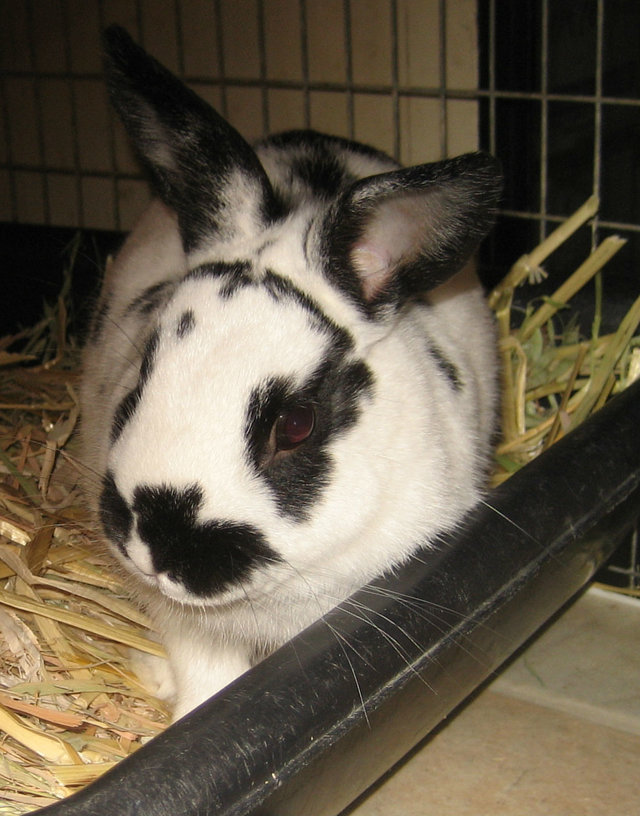We have 6 new bunnies that need to be neutered