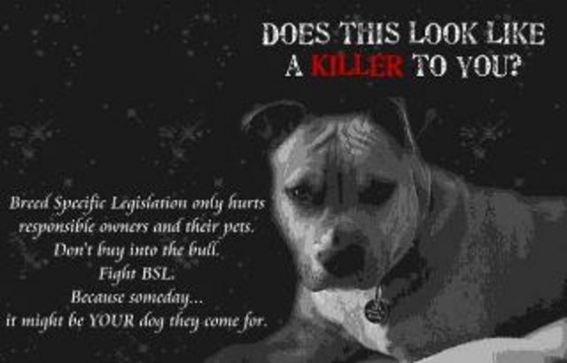 end bsl