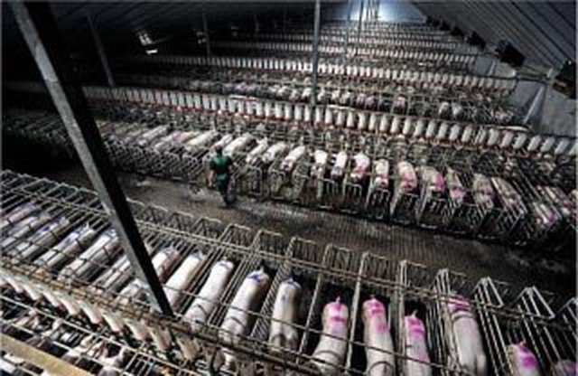 reduce the suffering of factory farmed animals