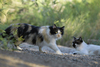 Support Feral Cats and Trap-Neuter-Return Programs