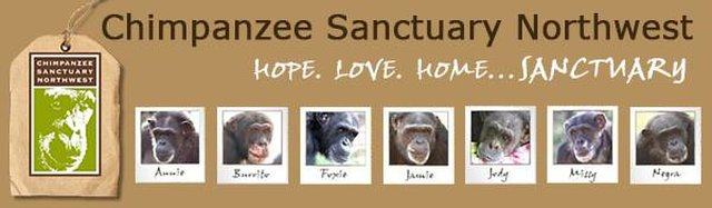 raise awareness and money for Chimpanzee Sanctuary Northwest.