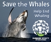Save The Whales! (official HSI)