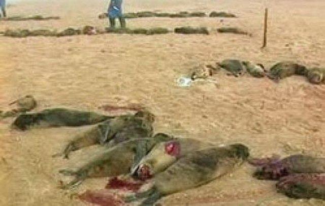 Seals of Nam