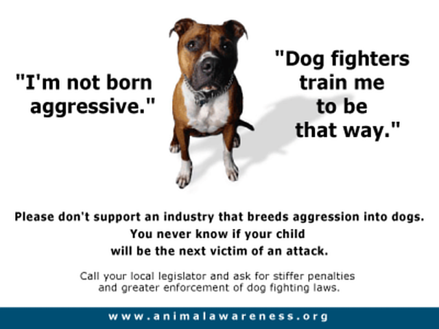 stop Dog Fights and cruelty to animals