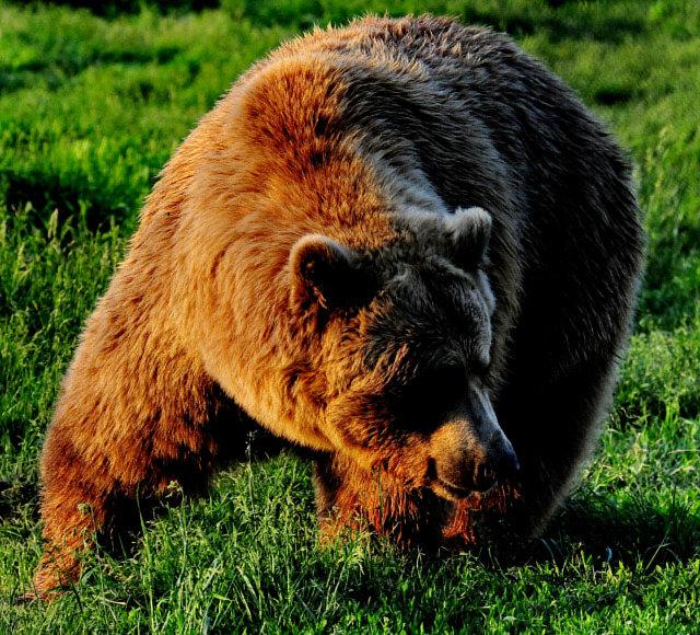 Ursii sunt prietenii nostri - Doamna Plumb te rugam nu-i plumbui!