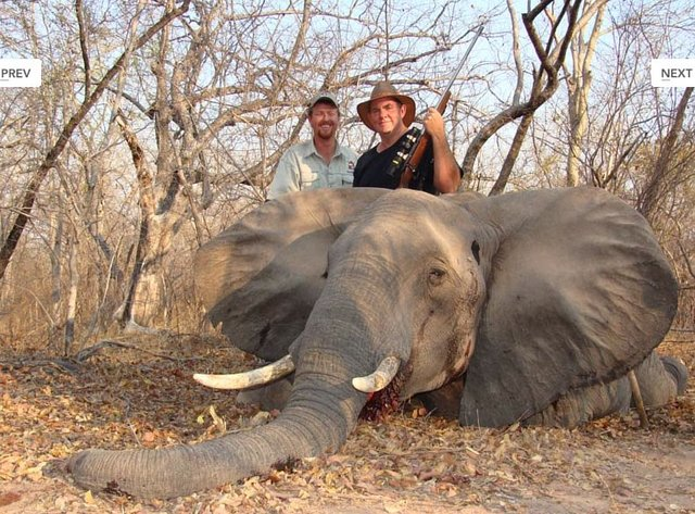 Stop Lew Harris Safaris barbaric killing of Animals for money and sport in Africa