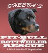 Sheeba's Pit-Bull & Rottweiler Rescue Inc