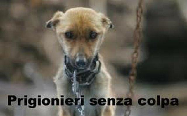 aboliamo le catene per i cani a Montebelluna
