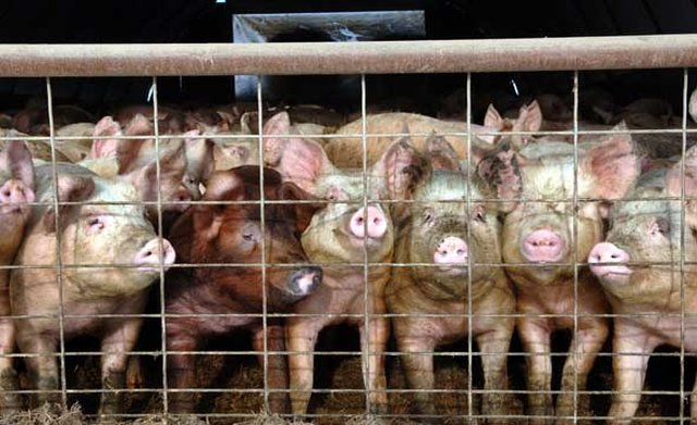 Protect People that Protect Animals - Stop Ag-Gag in Pennsylvania