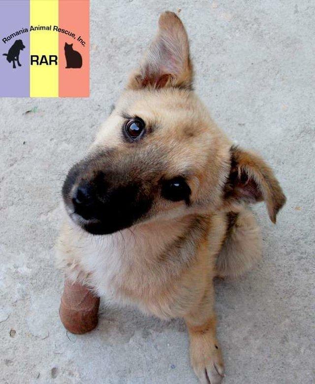 spread the rescue efforts of Romanian Animal Rescue