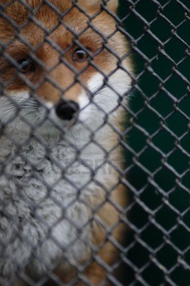 Just Say No to Fur!