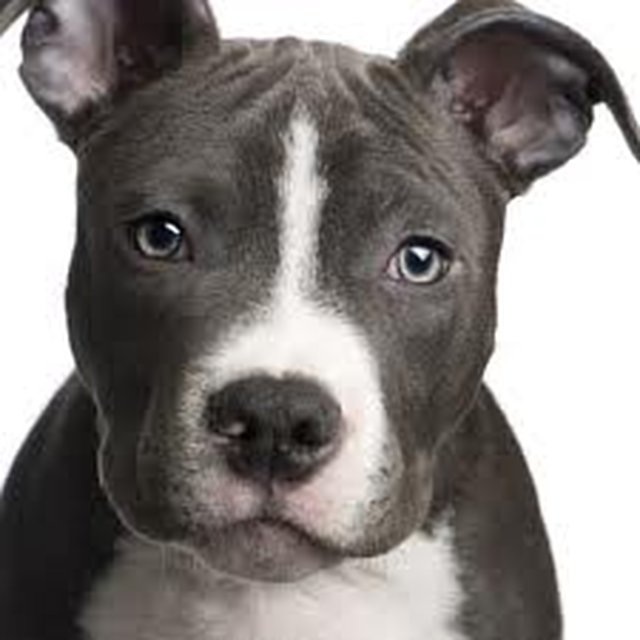 End the ban of pit bull type breeds in Ontario, Canada