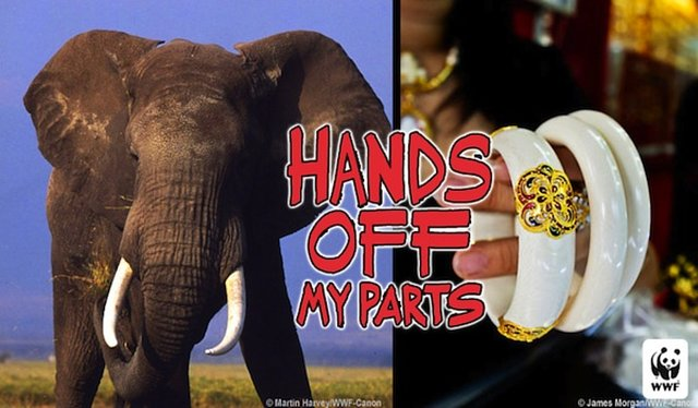 Urge Thailand to Ban the Trade of Ivory