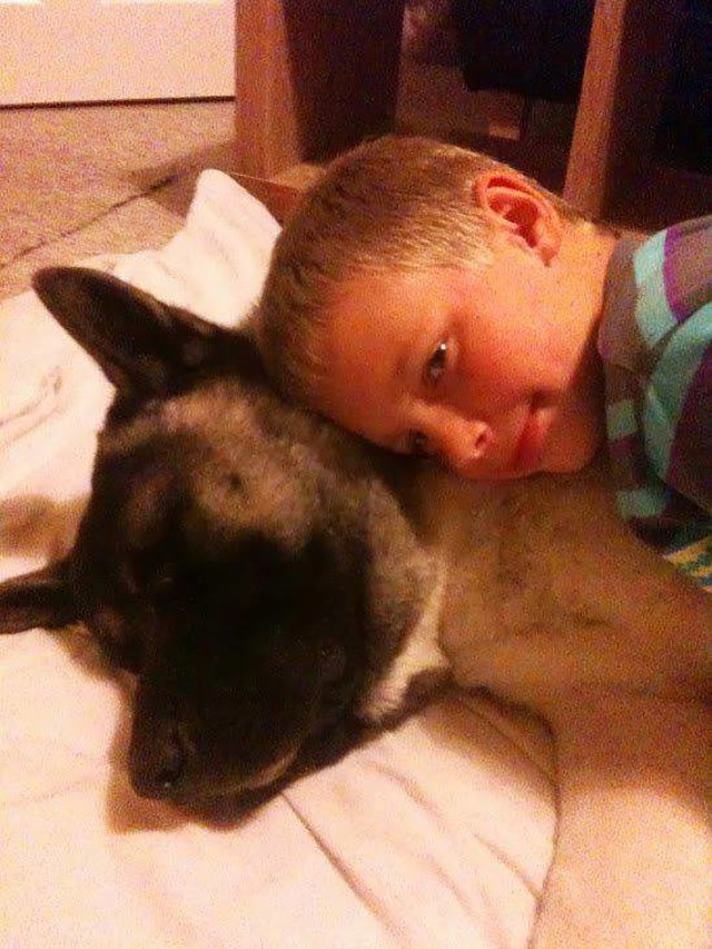 ADMINISTRATION OF CARLOW, IRELAND, KILLED THE DOG TAJFUN