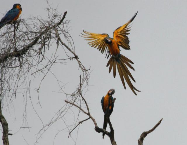 Foster Parrots, Ltd.
